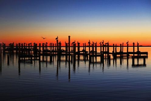 pelican-rest-20102