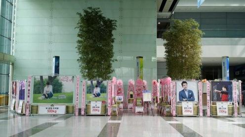 Image credit: The Dreame Garland Co. Korea / @dreamecokr (9/14/2014)